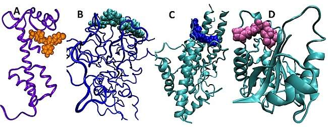 Our research aims to design antimalarial compounds that target unique protein-protein interactions