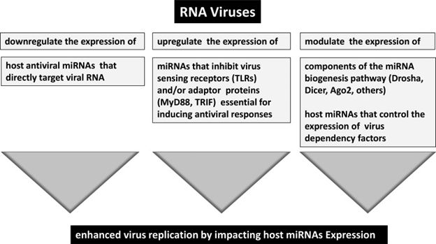 Multiple mechanisms by which RNA viruses can manipulate the  host RNA interference (RNAi) pathway for enhanced replication