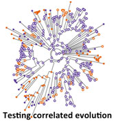 Diagram of tests of correlated evolution
