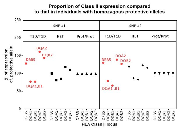 Proportion of Class II expression compared to that in individuals with homozygous protective alleles