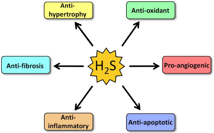 Cardioprotective effects of hydrogen sulfide in heart failure
