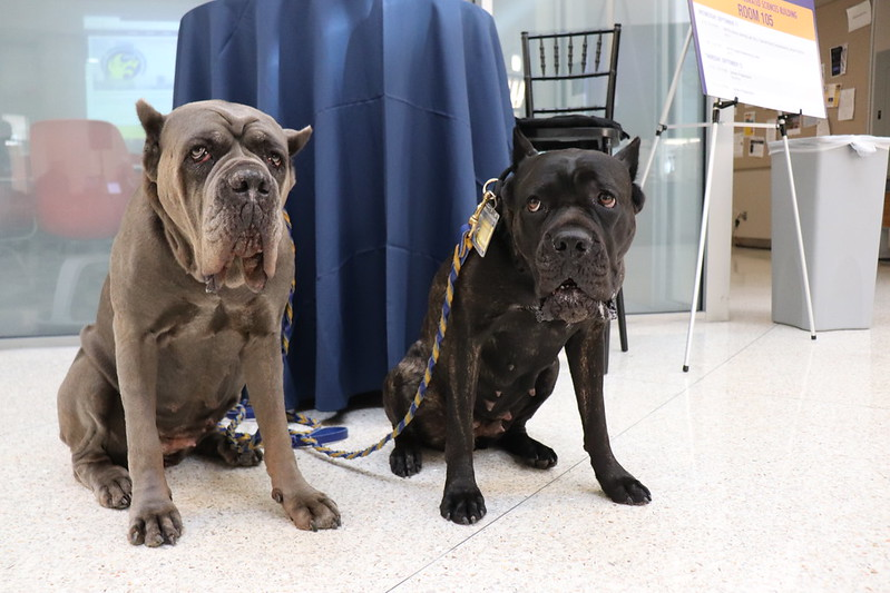 A photo of the Drexel Therapy Dogs