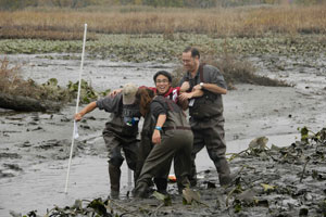 Dr. Jerry Mead, on right, and several environmental science students have fun pulling their classmate out of the mud. Students were examining plant communities along a gradient of elevation or frequency of wetting in the tidal, freshwater marsh.
