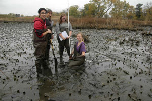 BEES students up to their elbows in mud (with soil core). This marsh team was using a quadrat to estimate plant densities, coring soils, and measuring water levels over time in the Tinicum marsh.