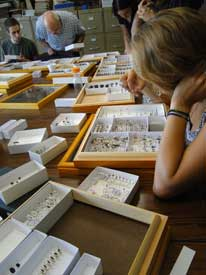 Students sorting specimens in boxes