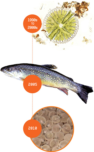 Exel Magazine Illustration Breathing Life Back into Brooktrout