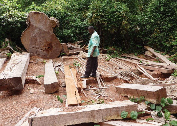 Illegal Logging in Ghana