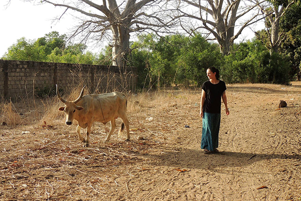 Drexel Chemistry Major Victoria Smith with a cow in The Gambia