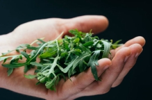 a hand holding some green herbs