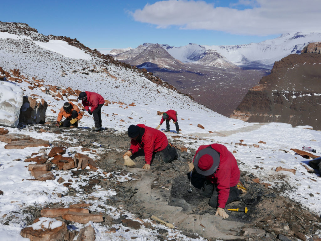 Digging for Fossils in Antarctica