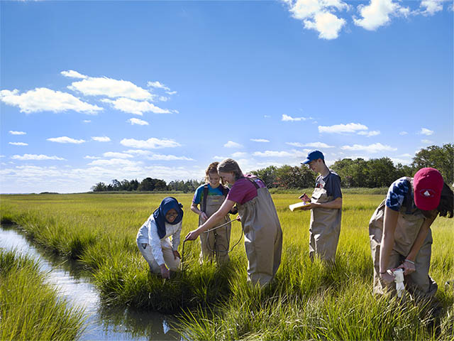 Students conducting field research in wetlands area