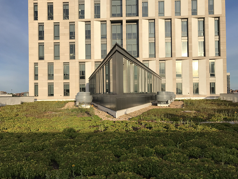 lebow hall green roof