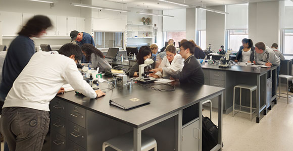 Students working and learning in a lab