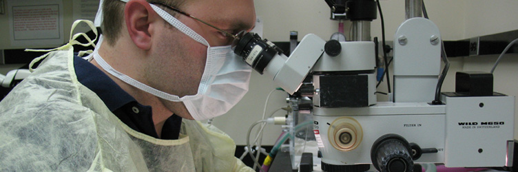 A Clinical Research program graduate student working in the laboratory at Drexel University College of Medicine.