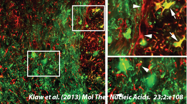 Mol. Ther. Nucleic Acids - Image from Drexel's Spinal Cord Research Center