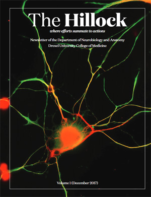 The Hillock - Volume 1 December 2017 - Department of Neurobiology and Anatomy