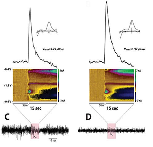 España Lab: Dopamine signaling can be measured during sleep/wake recordings.