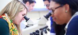 Students in the Graduate School for Biomedical Sciences and Professional Studies viewing slides under a microscope.