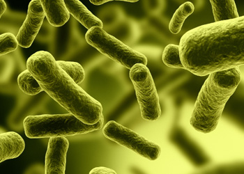 Clostridium difficile (C. difficile) bacterial infection