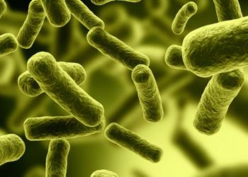 The bacterium Clostridium difficile