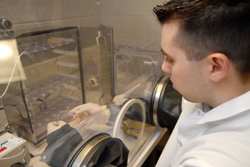 An Interdepartmental Medical Science program graduate student working in the laboratory.
