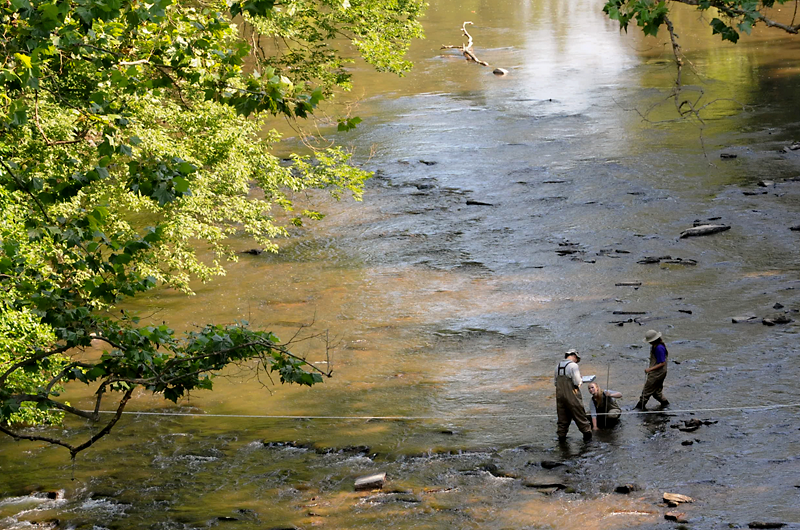 Academy scientists and a Drexel student collect algae and examine the rocks and water depth in Manatawny Creek as part of the Delaware Watershed Conservation Program. Photo Credit: John Strickler/The Mercury