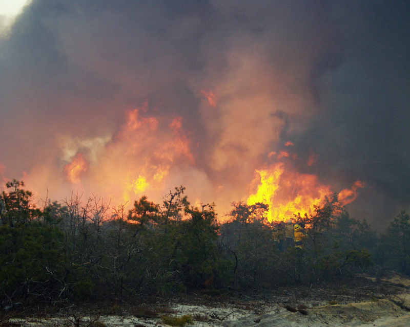 A prescribed burn at the Warren Grove Range in the New Jersey Pinelands. Credit: Walter Bien, PhD