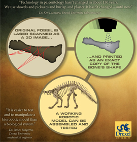 Infographic: Original fossil is laser scanned as a 3D image... And printed as an exact copy of the bone's shape. A working robotic model can be assembled and tested.