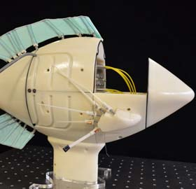 robotic fish model