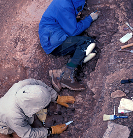 Excavating Devonian fossils in the Canadian Arctic. Credit: Academy of Natural Sciences of Drexel University