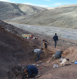 Field research team excavating Devonian fossils at the site in the Canadian Arctic where they found Tiktaalik roseae. Credit: Academy of Natural Sciences of Drexel University