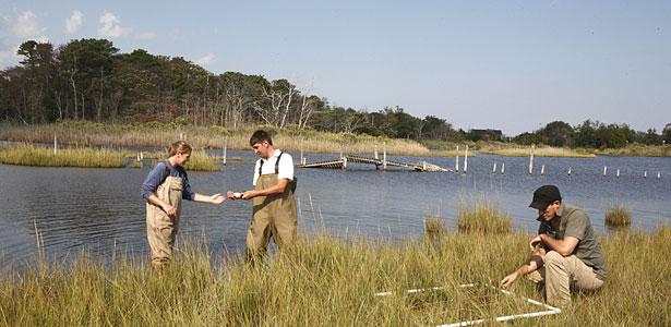 Students perform field research in a coastal habitat in Barnegat Bay, N.J.