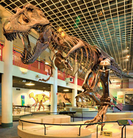 Image of Dinosaur Hall at the Academy of Natural Sciences
