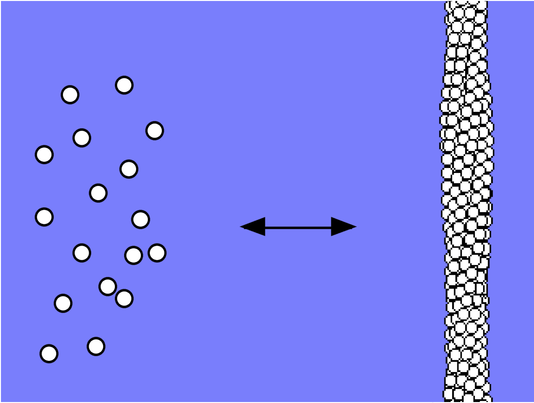 Inside sickle cells, hemoglobin molecules remain separate when carrying oxygen (left). The molecules combine to form long, rigid polymer chains (right) when not carrying oxygen.