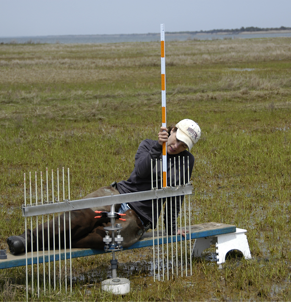 Dr. Tracy Quirk uses a meter stick and a Surface Elevation Table (SET) to measure relative sediment elevation change in a salt marsh in Barnegat Bay, N.J.