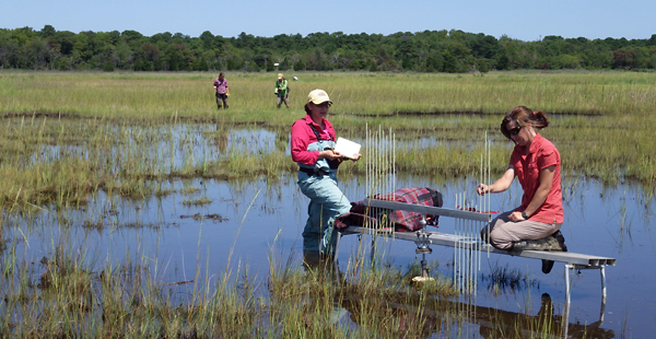 Foreground: Dr. Tracy Quirk uses a Surface Elevation Table (SET) to measure relative sediment elevation change in a salt marsh in Barnegat Bay, NJ while staff scientist Linda Zaoudeh records data. Background: Staff scientist Stephanie Leach and Drexel environmental science graduate student Viktoria Unger use Real Time Kinematic (RTK) satellite navigation with GPS technology to measure the elevation of the marsh.