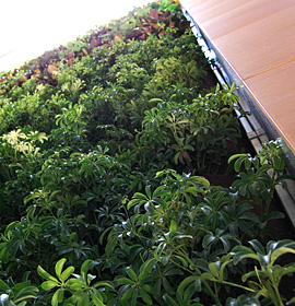 Biowall - a vertical wall of living plants.
