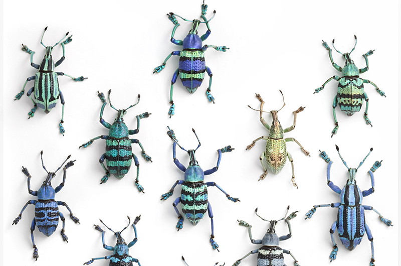 Pinned insects