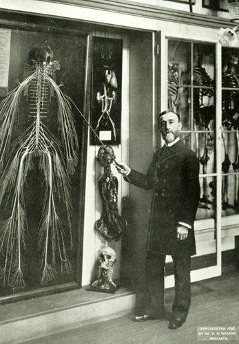 Harriet Cole human nervous system