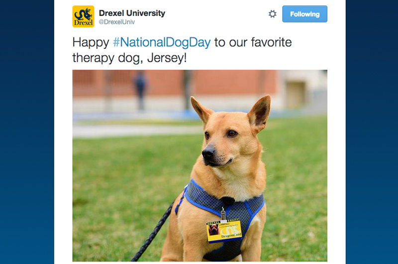 A Drexel Twitter post featuring Jersey the Therapy Dog for #NationalDogDay.