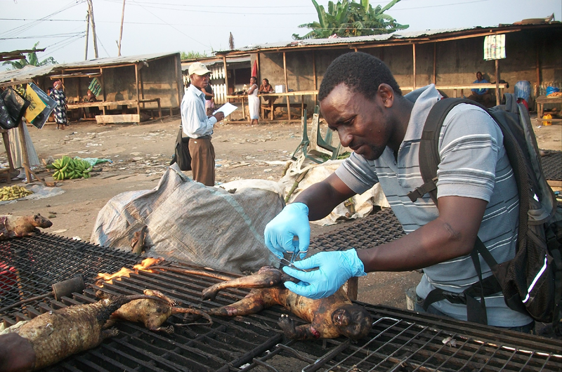 BBPP research staff, Illidio Mebulo, collecting a sample of primate tissue in the market for genetic analysis. Credit: Javier Rivas/BBPP