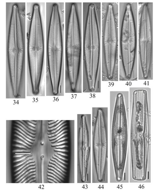 Navicula subwalkeri holotype specimen from Oregon.