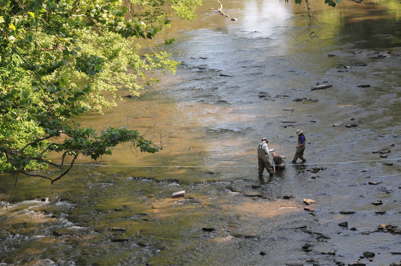 Academy of Natural Sciences of Drexel University scientists collect algae and examine the rocks and water depth in Manatawny Creek as part of the Delaware Watershed Conservation Program. Photo Credit: John Strickler/The Mercury.