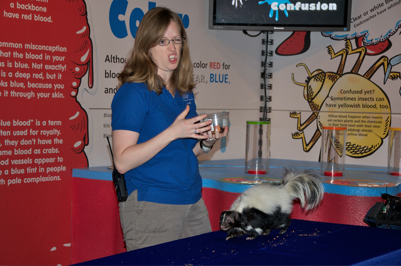 Teacher naturalist Caitlin Halligan at Academy of Natural Sciences' making a face as she presents on a skunk's scent to a group of children.