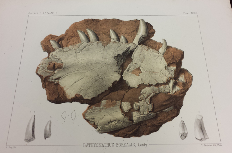 A lithograph of the fossil from around the time it originally made its way into the Academy's collection.