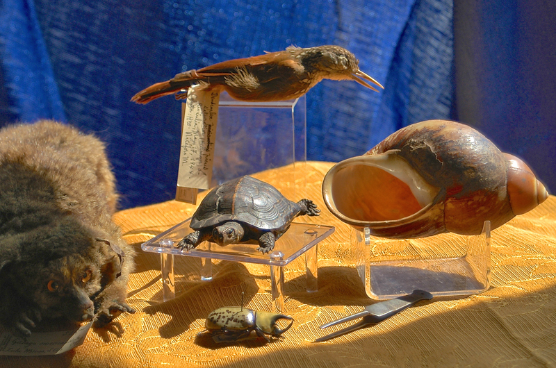 Specimens from that were contributed to the Academy's collection by clergy during the museum's early days. They include a bushbaby, giant snail, beetle, turtle and bird.