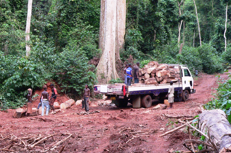 An illegal logging operation in the Krokosua Hills Forest Reserve. Photo credit: Nicole Arcilla.
