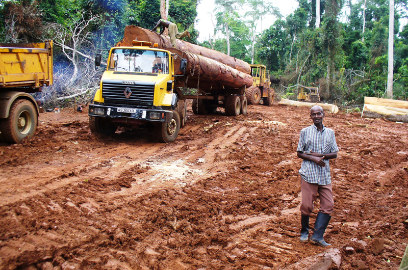 A legal logging operation in the Sui River Forest Reserve. Photo credit: Nicole Arcilla.