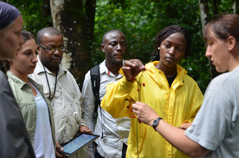 The Central African Biodiversity Alliance 2015 Undergraduate Field Course Plant Research Group at Mbam & Djerem National Park, Cameroon. Pictured from left to right: Katie DiAngelus (Drexel), Katherine Achy (UCLA), Dr. Maximilliano Fero (National University of Equatorial Guinea), Francisco Mitogo (National University of Equatorial Guinea), Andrienne Bih (Univeristy of Buea, Cameroon) and Alexandra Ley (University of Halle-Wittenberg, Germany). Photo credit: David Montgomery.
