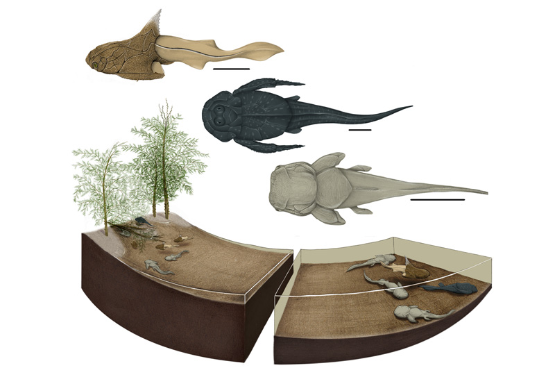 An artist's depiction of what the Strud nursery ecosystem may have looked like, including the three different placoderm species discovered at the site and the likely plant-life there. Image by Justine Jacquot-Hameon/PLOS-One.